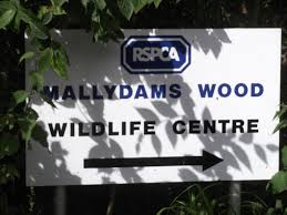 gspca shelter staff learn from some of the leading uk animal