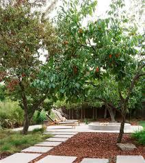 backyard garden with fuyu persimmon tree fuyu persimmon tree