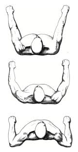 the bench press chesticles pinterest shoulder muscles