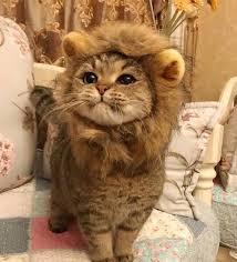Lion Meme - he wants to be a lion meme by bolt93 memedroid