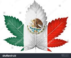 mexican flag painted on cannabis marijuana stock illustration
