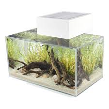 awesome fish tank ideas you will well done stuff