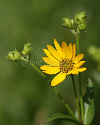 wisconsin native plants wisconsin native wildflowers archives window to wildlife