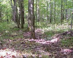 Kentucky forest images Landowner services kentucky woodland owners association jpg