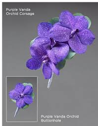 Blue Orchid Corsage Purple Vanda Orchid Corsage Dundee Flowers