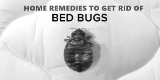 Bed Bug Home Remedies Home Remedies To Get Rid Of Bed Bugs Naturally