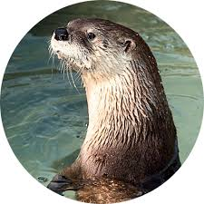 otter facts for kids otter information dk find out