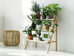 Beautiful Indoor Plants 55 Easy To Maintain Beautiful Variety Of Indoor Plants To Deck Up