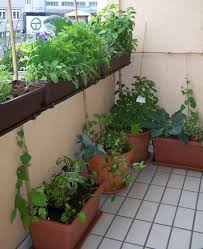 herbal plants u2013 a balcony full of smell hum ideas