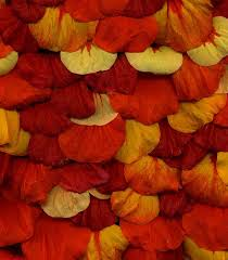 Burnt Orange Colour by 205 Best Color Red Orange Yellow Images On Pinterest Color Red