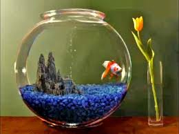 kerala asks centre to withdraw notification on ornamental fish