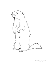 Animal Groundhog Coloring Page Coloring Pages Groundhog Color Page