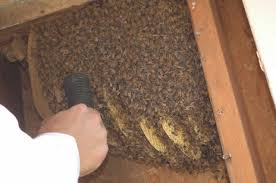 bed bug exterminator las vegas bed bug exterminator las vegas nv 89117 list of new places in