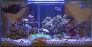 fluval edge marine light fluval 6 gallon noob tank aquarium journals nano reef com community