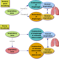 endocrine system concept map diagram of endocrine system human anatomy chart