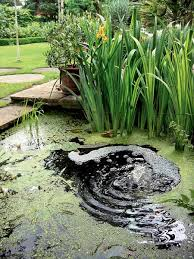 Diy Backyard Ponds Amazing Of Outdoor Fountain Pond Beautiful Backyard Ponds And