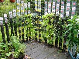 kitchen gardening ideas 13 plastic bottle vertical garden ideas soda bottle garden