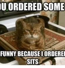 Cat Sitting Meme - u ordered some funny becauseiorderei sits cat sitting on pizza