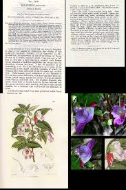 native plants in tropical rainforest rare thailand parrot flower impatiens psittacina exotic