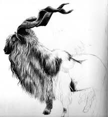 tattoo pen goats tansey illustrates a male markhor doodle in ball point pen i love