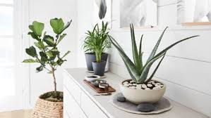 how to care for and not kill your houseplants