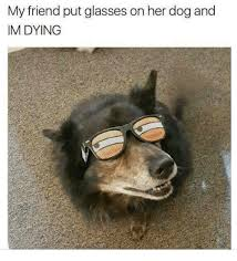 Dog With Glasses Meme - my friend put glasses on her dog and im dying dank meme on me me