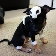pokemon puppy halloween kirby turtwig dog costume houndour