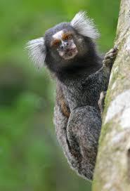 monkeys archives animal fact guide