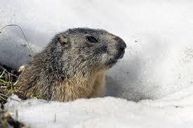 10 fun facts history groundhog
