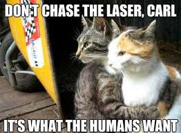 Cute Cats Memes - wise cats humorkitty funny cat pictures funny cat memes funny