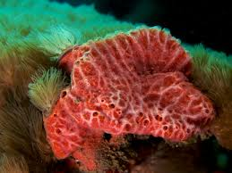 Strawberry Vase Sponge Commons Featured Pictures Animals Wikimedia Commons