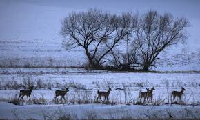 controversial u0027dr deer u0027 stirs the pot in minnesota u0027s cwd disease