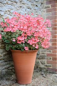 105911 best great gardens u0026 ideas images on pinterest garden