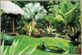 collection in backyard tropical landscaping ideas backyard