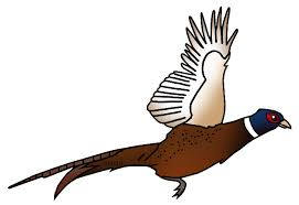 state bird of south dakota united states clip art by phillip martin state bird of south