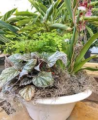Bathtub Planter Design Ideas For Arranging Indoor Plants Triangle Gardener Magazine