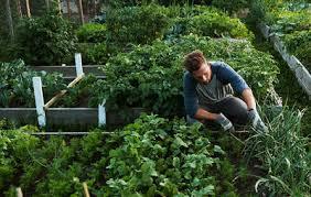 how to build a vegetable garden men u0027s health