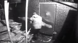 video captures thieves stealing 190 christmas trees to sell from