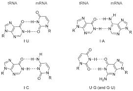 transcription translation and replication