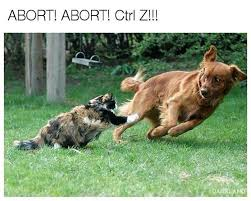 Funny Animal Pictures Memes - really funny animal memes that will make you lol 5 justviral net