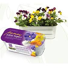 organic edible flowers organic edible flower kit pansy grocery gourmet food