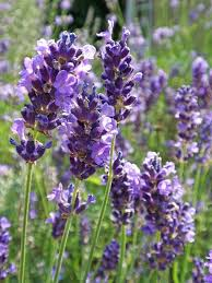 plants that keep mosquitoes away 8 amazing plants that u0027ll repel mosquitoes and other pests