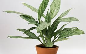 indoor plant 8 super cute indoor plants to buy right now gold coast the