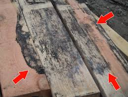 cleaning mold from wood fearsome on home decorating ideas in