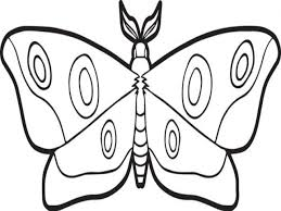 a butterfly glass frog coloring page 25 delightful frog coloring
