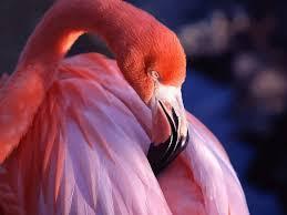 Flamingo Rugs 190 Best Flamingos Images On Pinterest Pink Flamingos Animals