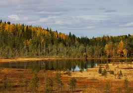 wood lake autumn landscape nature karelia stock photo image