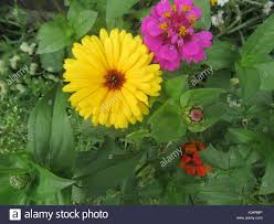 Types Of Flower Gardens Easy To Grow Garden Flowers In Various Colors And Types Daisy