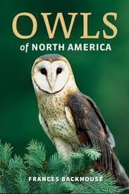 North American Barn Owl Owls Of North America Frances Backhouse
