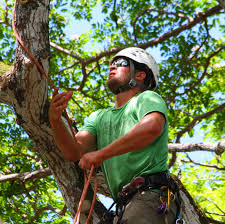 What Does A Landscaper Do by What U0027s The Difference Between An Arborist And Landscaper